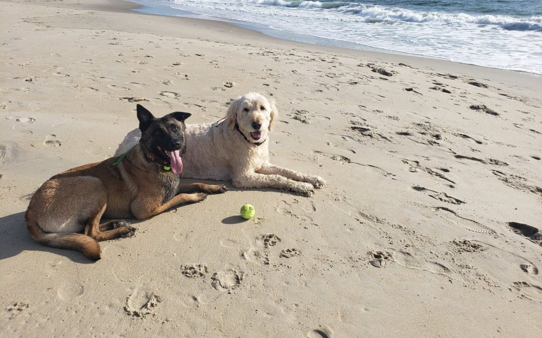 Our Top Tips for Vacationing with Dogs